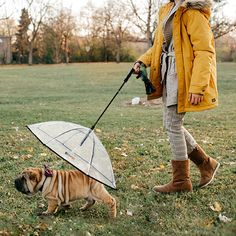 Pet Dog Umbrella with Leash for Small Pets - Gifteee - Unique Gift Ideas for Adults & Kids of all ages. The Best Birthday Gifts & Christmas Gifts. Christmas Gifts For Pets, Christmas Animals, Funny Christmas, Funny Babies, Funny Dogs, Funny Memes, Dog Umbrella, Animal Birthday, Funny Birthday