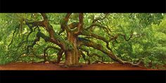 Peter Lik Photography  Have a look around, AmAzING!