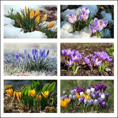 Margaret Gluten-free Cuisine: Wiosna w obiektywie I. Spring in the lens I.
