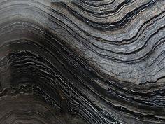 Acient Wood Veins