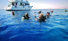 Sheikh Coast Diving Center is situated near the beach of Domina Coral Bay Resort & Casino and is spread over 450 square meters; it has its own private pier that allows immediate boarding on our 6 fast and comfortable boats that make daily trips on the beautiful Red Sea.