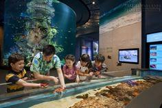 Ghé thăm thủy cung lớn nhất Singapore với vé máy bay giá rẻ | Tin Tức Tiger Airways
