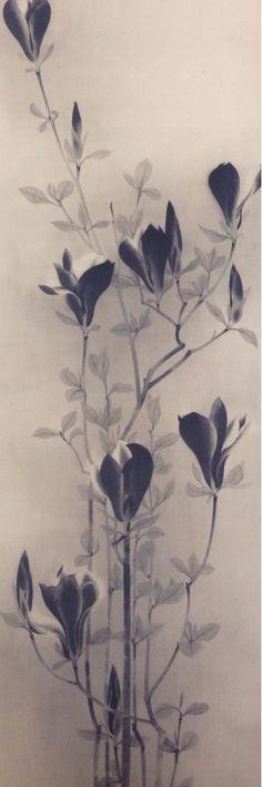 速水御舟/木蓮(Magnolia)