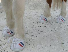 Miniature Horse Tennis Shoes | ... horse questions - Miniature Horse Forum - Lil Beginnings Miniature