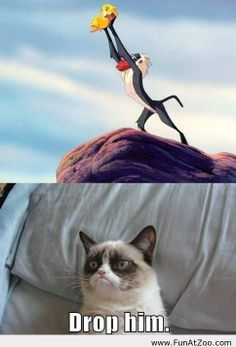 Grumpy cat humor - Funny Picture