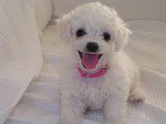 dog health   DoggieDeliveries.com