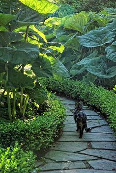 path lined with boxwood and elephant ears hardscaping gardening garden path landscaping garden design Garden Paths, Garden Art, Garden Landscaping, Landscaping Ideas, Balcony Gardening, Succulent Gardening, Tropical Landscaping, Diy Garden, Container Gardening