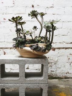 zhu ohmu 植物繕い (Plantsukuroi) In 2015 I began experimenting with clay to hold my growing collection of houseplants. My current ceramics practice explores the materiality of clay through simple handbuilding techniques. Without formal training in ceramics, my self-instructed coiling method often leads to breakage and imperfections during the drying and/or firing process. Inspired by the Japanese tradition of kintsukuroi – the art of repairing broken pottery with gold, I instead use plant life…