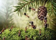 Russian photographer Andrey Pavlov, thanks to its constancy managed to explain through your camera and your creativity a magical world inhabited by ants.