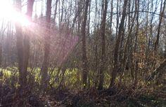 Lichtspiele im herbstlich-winterlichen Wald!