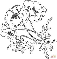 Poppies Flower coloring page | SuperColoring.com