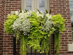 Pretty combo for a hanging basket as well as a flower box....looks like potatoe vines, creeping jenny, maybe bacopa or verbena then some wave petunias on the top.... nice combo.... could try by the garden shed