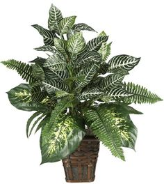 Nearly Natural 6528 Greens Zebra with Wicker Decorative Silk Plant, Green Nearly Natural http://www.amazon.com.mx/dp/B001F0KYHS/ref=cm_sw_r_pi_dp_h3B.vb1ZRFN7B