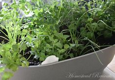 Homestead Revival:How to  Propagate Herbs