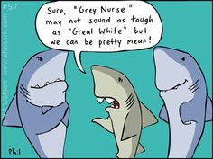 shark-cartoon-57
