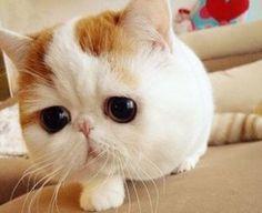 chubby!!!