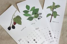 Herb calenders. Print on good art card as gift. Hope there's more for 2013!