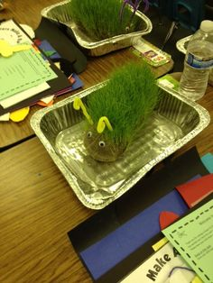 Grass Caterpillar. Saw this at an Open House. Teacher used panty hose, soil, grass seeds, and rubber bands. Students were responsible for watering their plant every other day, and placing it outdoors each day. What a wonderful project!