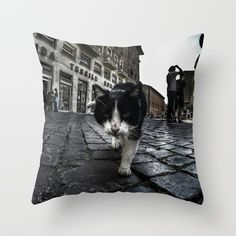Close up portrait of a tough street cat in the city of Rome.  #cat #streetcat #animal #streetphotography #photography #gopro #wideangle #street #city #cityphotography #rome #italy #pillow #homedecor