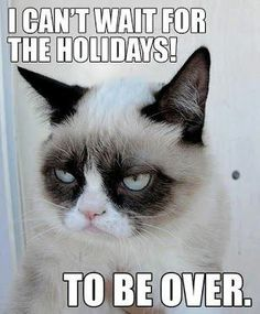 xD Oh Grumpy Cat! Grumpy Cat This is what my cats do. Grumpy Cat Quotes, Grump Cat, Funny Grumpy Cat Memes, Funny Cats, Funny Animals, Cute Animals, Grumpy Kitty, Grumpy Baby, Funniest Animals