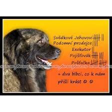 dva blbci - Hledat Googlem Humor, Motto, Dogs, Animals, Animales, Animaux, Humour, Pet Dogs, Funny Photos