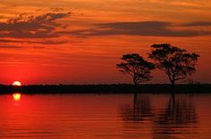 Pantanal - State of Mato Grosso do Sul - BR
