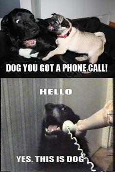 And The Internet Dog Who Started It All:   The 36 Funniest Dog Pics Known To Man