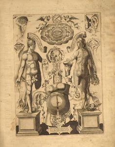 Remmelin's Anatomical 'Flap' Book (1667) | The Public Domain Review