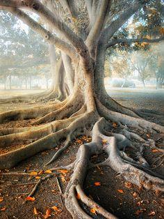 Quel arbre!