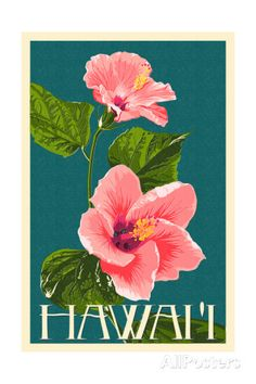 Hawaii - Pink Hibiscus Flower Print by Lantern Press at AllPosters.com