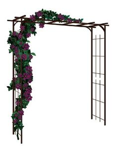 plantes grimpantes pour pergola ou tonnelle fiches conseils arches tonnelles et pergola. Black Bedroom Furniture Sets. Home Design Ideas
