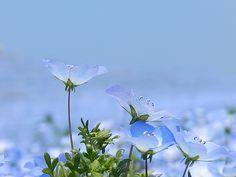 Blue by Marcela de Lima on 500px