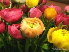 colorful-persian-buttercups by smell-the-flowers, via Flickr