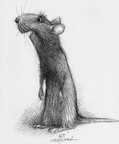 Character design and concept art from Disney-Pixar's Ratatouille. Artwork by Carter Goodrich. Art Disney, Disney Kunst, Disney Pixar, Disney Animation, Cute Drawings, Animal Drawings, Creature Design, Cute Art, Character Art