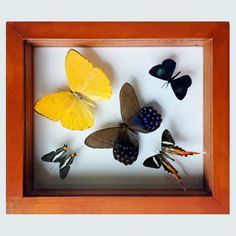 Fire Swordtail and Purple Butterfly Collection with Five Different Species. $39.99, via Etsy.