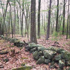 【tinymythos】さんのInstagramをピンしています。 《Old stone wall. Spring 2016. マサチューセッツ州には200年前からの石の壁はあっちこっちにあります。 🌲 🌲 #アメリカ #アメリカ生活 #アメリカ旅行 #海外 #風景 #風景写真 #自然 #自然大好き #森 #ボタニカル #nature #naturelovers #naturephotography #natureshots #landscape_lovers #landscape_lovers #landscapephotography #forest #natur #forst #ファインダー越しの私の世界 #写真好きな人と繋がりたい #写真撮ってる人と繋がりたい #カメラ女子》