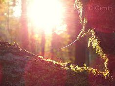 Centi bastelt: Waldspaziergang mit Abendsonne