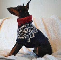 Bilderesultat for bichon frise marius genser Knit Dog Sweater, Dog Sweaters, Bichon Frise, Holidays And Events, Scandinavian, Cute Animals, Dog Clothing, Sewing, Pets