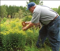 Bee Lining: The Oldtimers' Way to Find Wild Beehives