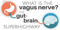 Ever wonder - what is the vagus nerve? As it turns out, a well-toned vagus nerve supports gut health and mental wellbeing. It's what unites the gut and brain. This explains why gut disorders are often connected to depression, anxiety, and more. Gut Brain, Brain Health, Gut Health, Thyroid Health, Vagus Nerve Damage, Nerf Vague, Natural Remedies For Gout, Brain Connections, Nerves Function