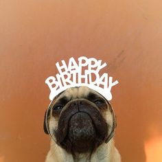 Because he looks super adorable wishing you a happy birthday. - Happy Birthday Funny - Funny Birthday meme - - Because he looks super adorable wishing you a happy birthday. Birthday Pug, Happy Birthday Meme, Animal Birthday, Birthday Messages, Birthday Greetings, Birthday Wishes, Birthday Memes, 15th Birthday, Birthday Ideas