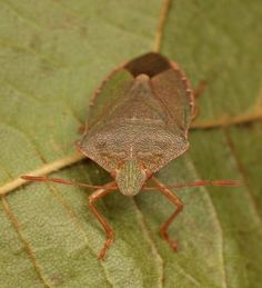 tips for Preventing a Stink Bug Infestation