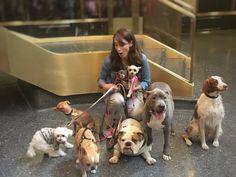 It's hard to wrangle celebrities @TODAYshow @AnimalPlanet @Tuna_the_dog @ChloeTheMini @CKardoggian @ellabeanthedog