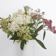 plants + flowers - lb.bloom