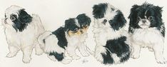 Japanese Chin Puppies by Barbara Keith Loris Animal, Cute Puppies, Cute Dogs, Japanese Chin Puppies, Photo Pattern, Companion Dog, Kinds Of Dogs, Lap Dogs, New Kids