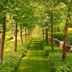 This lush, green, tree-lined path looks as though it came from a storybook. - Traditional Home ® / Photo: Matthew Benson / Design: Gordon Hayward