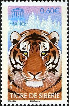 Siberian Tiger - France