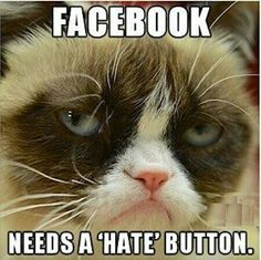 40 Grumpy Cat Memes That You Will Love! - Grumpy Cat - Ideas of Grumpy Cat - 40 Grumpy Cat Memes That You Will Love! The post 40 Grumpy Cat Memes That You Will Love! appeared first on Cat Gig. Grumpy Cat Quotes, Funny Grumpy Cat Memes, Cat Jokes, Funny Animal Memes, 9gag Funny, Funny Cats, Funny Animals, Funny Memes, Funny Quotes