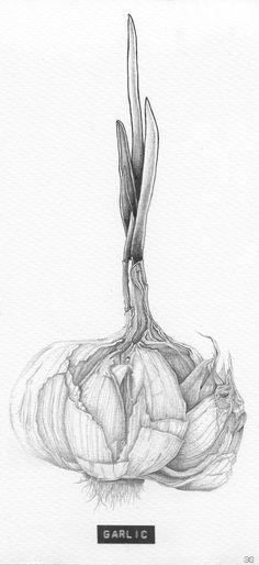 Title: 'Garlic' Client: SLA Type: drawing / tattoo design / illustration Year: 2013 #foodart | https://lomejordelaweb.es/