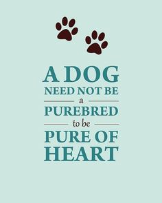 I prefer having pure bred dogs but there is nothing like a rescue dog i think :)
